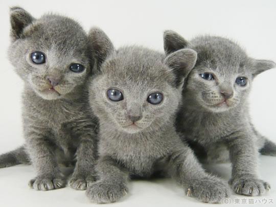 20120216_a7bc89dc ネコの人気ランキング!